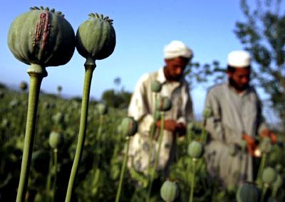afghanistan-opium-