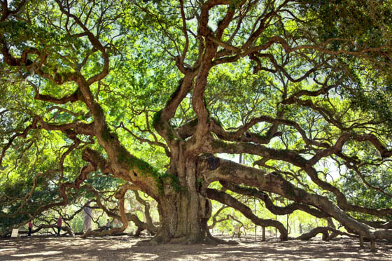 angel-oak-1