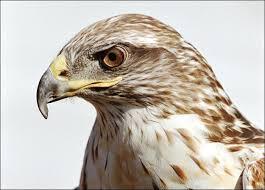 hawksss